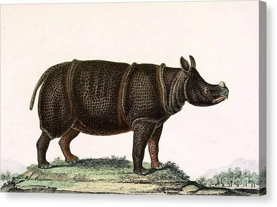 One Horned Rhino Canvas Print - Javan Rhinoceros, Endangered Species by Biodiversity Heritage Library