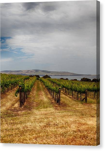 Pennington Bay Canvas Print - Kangaroo Island by Annela Christie