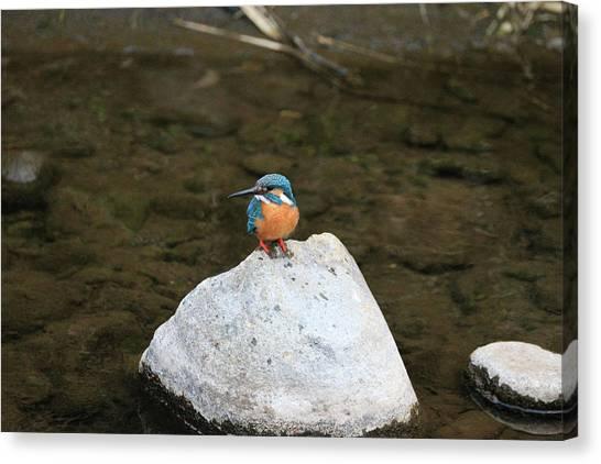 Kingfisher Canvas Print - Kingfisher by Hironori Funato