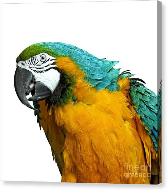 Macaw Bird Canvas Print