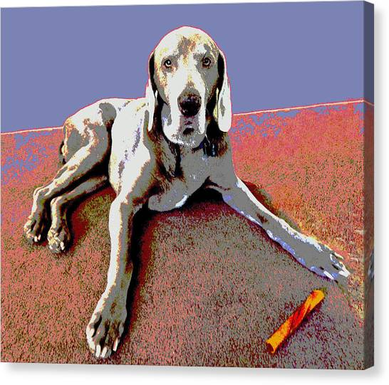 Weimaraners Canvas Print - Martina by Julie Niemela