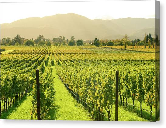 Grapes Canvas Print - Napa Valley In Autumn by Brandon Bourdages
