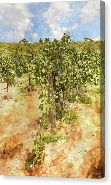Napa Vineyard In The Spring Canvas Print