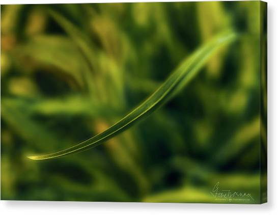 Canvas Print featuring the photograph Natures Way by Gene Garnace