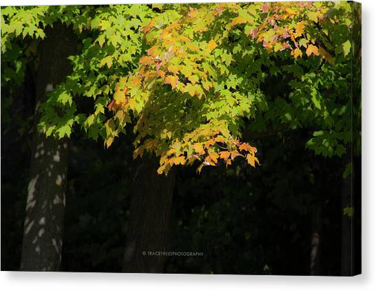 University Of Illinois Canvas Print - October Colors by Tracey Rees