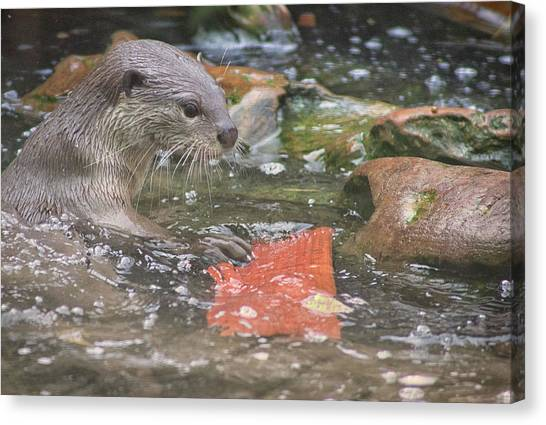 Otters Canvas Print - Otter by Martin Newman