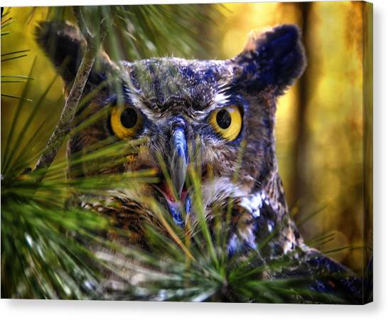 Canvas Print - Owl In The Pines by Peg Runyan