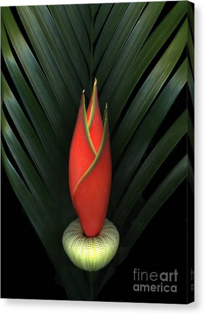 Palm Of Fire Canvas Print
