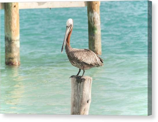 Pelican At Isla Mujeres Canvas Print