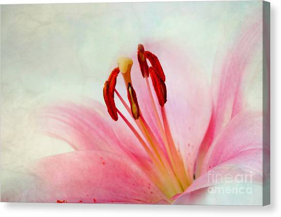 Old Age Canvas Print - Pink Lily by Nailia Schwarz
