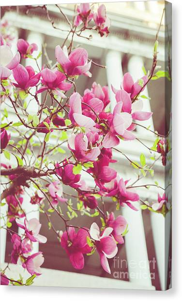 Magnolia Trees Canvas Prints Page 59 Of 99 Fine Art America