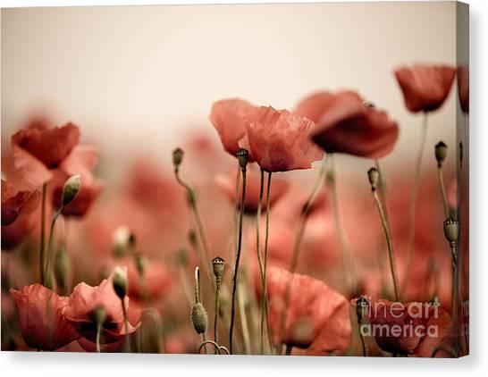Fineart Canvas Print - Poppy Dream by Nailia Schwarz