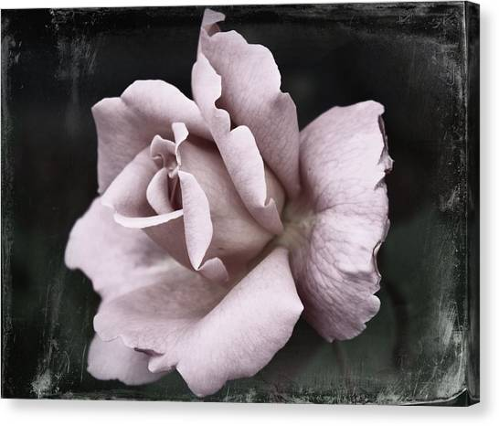 Roses Digital Art Canvas Print - Purple Rose by Cathie Tyler