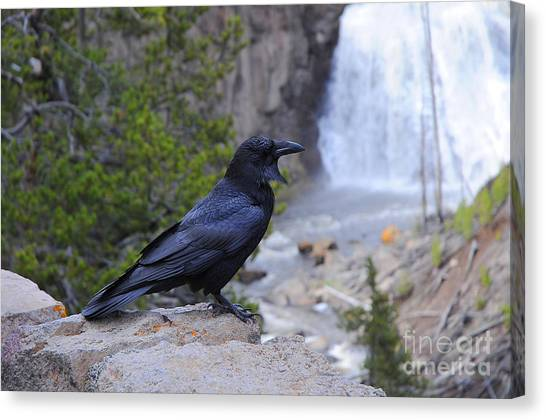 Raven Canvas Print by Dennis Hammer