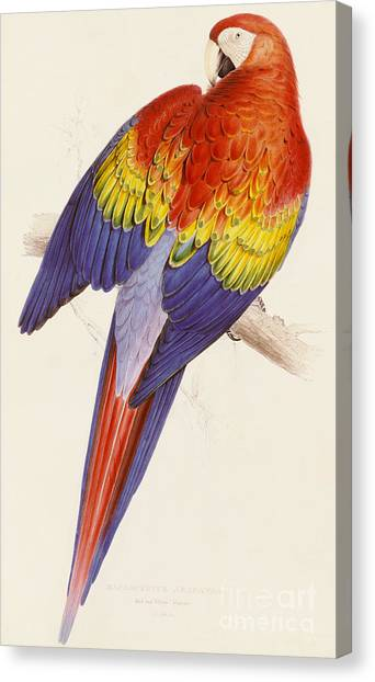 Macaws Canvas Print - Red And Yellow Macaw by Edward Lear