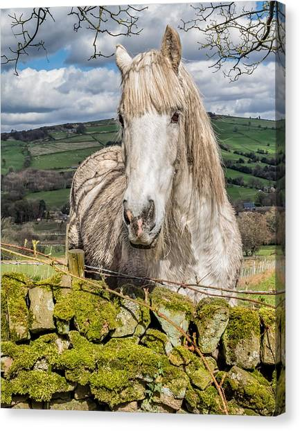 Canvas Print featuring the photograph Rustic Horse by Nick Bywater