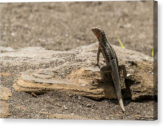 Santiago Lava Lizard Canvas Print by Harry Strharsky