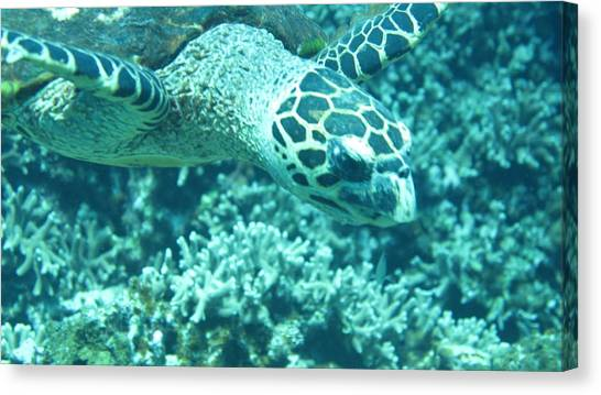 Sea Turtles Canvas Print - Sea Turtle by Hironori Funato