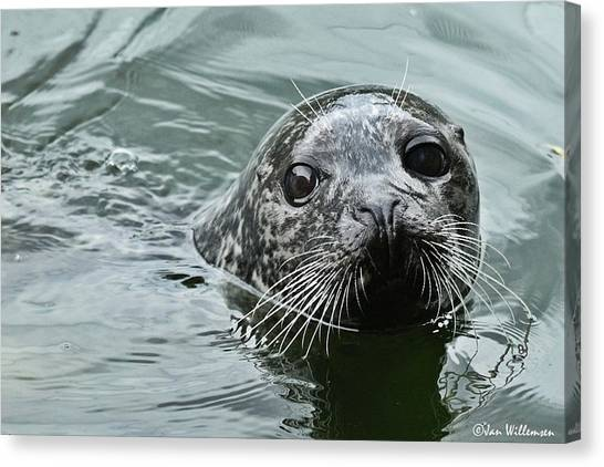 Otters Canvas Print - Seal by Mariel Mcmeeking