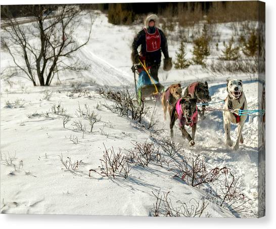 Huskie Canvas Print - Sled Dog Races by Upper Peninsula Photography