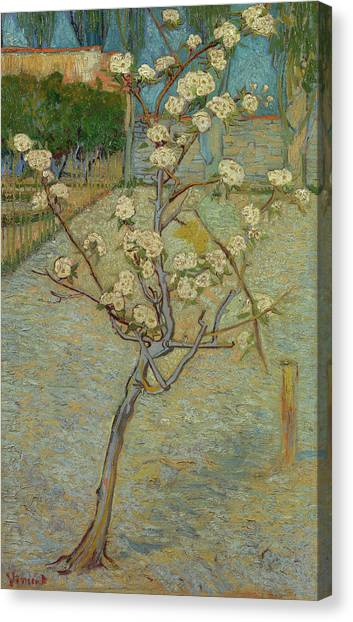 Post-modern Art Canvas Print - Small Pear Tree In Blossom by Vincent van Gogh