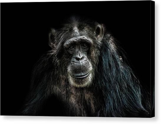 Chimpanzees Canvas Print - Smile by Martin Newman