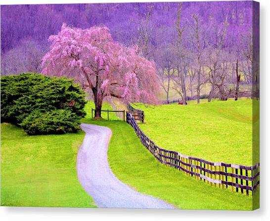Purple Haze In The Distance Canvas Print