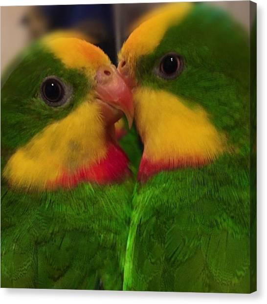 Lovebirds Canvas Print - 2 Sweet Boys #schildsittich by Alessandro  Lo Monaco