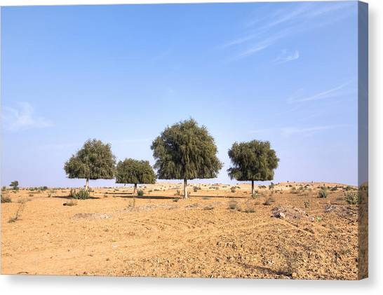 Thar Desert Canvas Print - Thar Desert - India by Joana Kruse