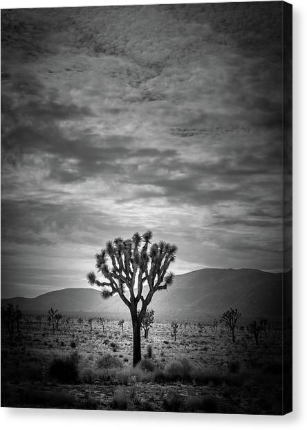 Black Rock Desert Canvas Print - The Joshua Tree by Peter Tellone