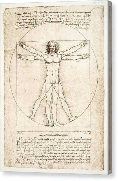 Lines Canvas Print - The Proportions Of The Human Figure by Leonardo Da Vinci