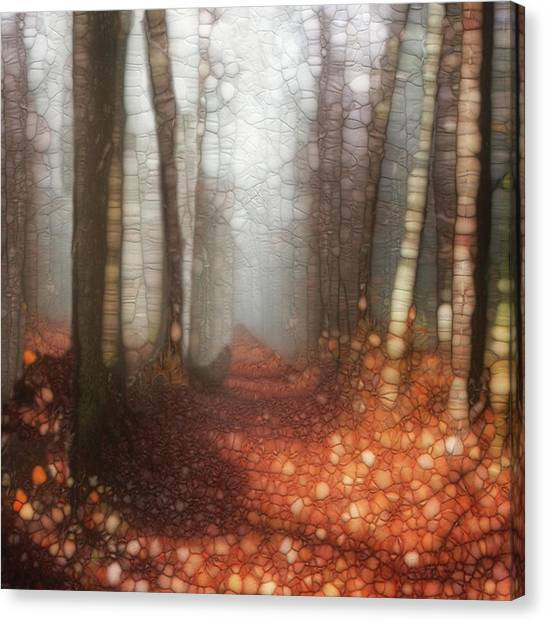 Forest Paths Canvas Print - Trail Series 5 by Jack Zulli