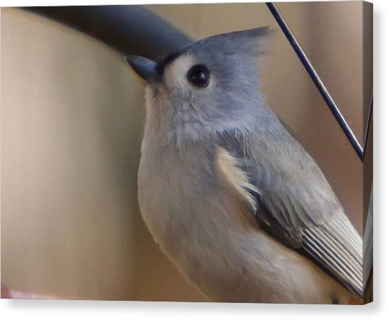 Canvas Print featuring the photograph Tufted Titmouse by Robert L Jackson
