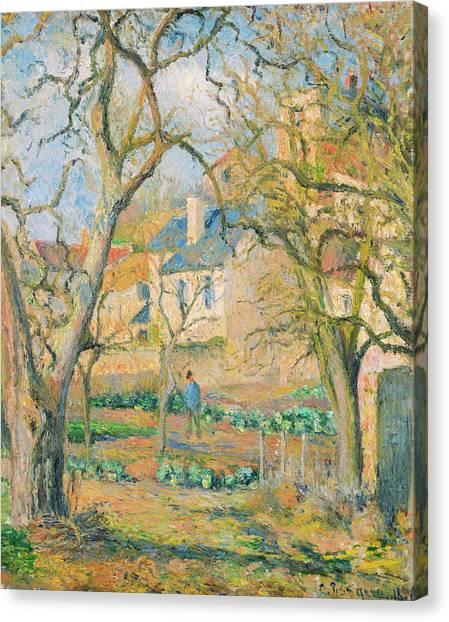 Vegetable Garden Canvas Print - Vegetable Garden by Camille Pissarro