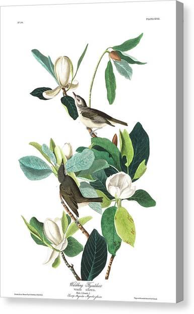 Flycatchers Canvas Print - Warbling Flycatcher by John James Audubon