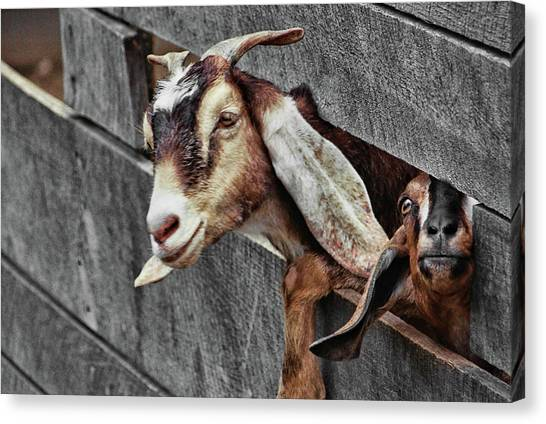 What's Going On? Canvas Print by JAMART Photography