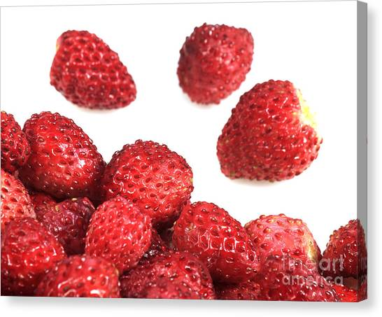 Wild Berries Canvas Print - Wild Strawberries Fragaria Vesca by Gerard Lacz