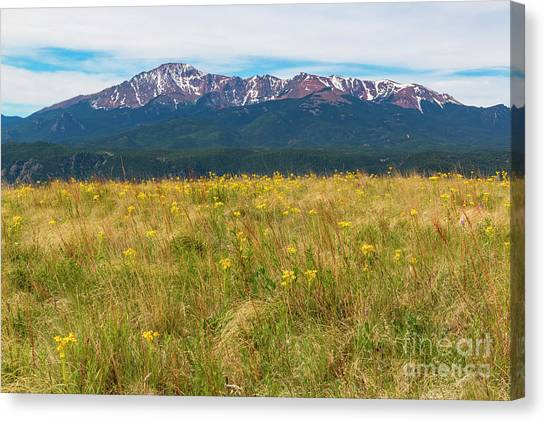 Wildflowers And Pikes Peak Canvas Print