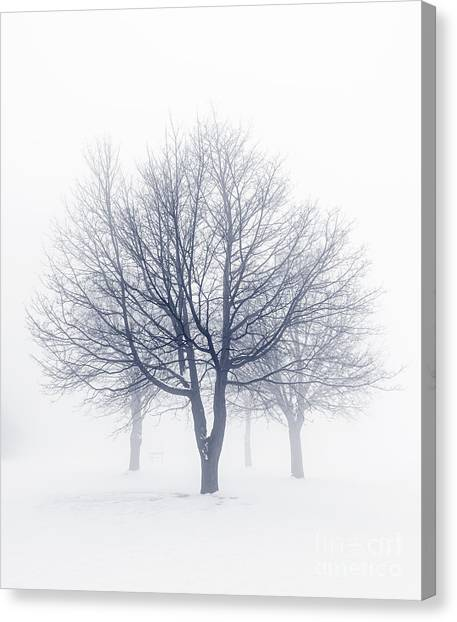 Stark Canvas Print - Winter Trees In Fog by Elena Elisseeva