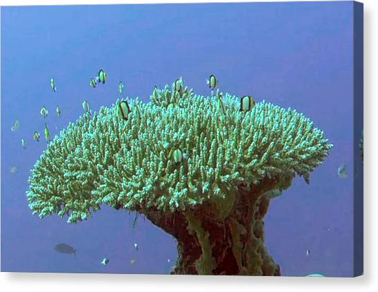Zanzibar Island Sea  Coral Reef Vegitation Bio Diversity Of Exotic Fish Plants And  Organisims Zanzi Canvas Print