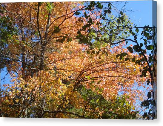 Autumn In Ma Canvas Print by Victoria Wang