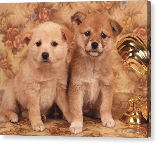 Teddy Bears Canvas Print - Dog by Maye Loeser