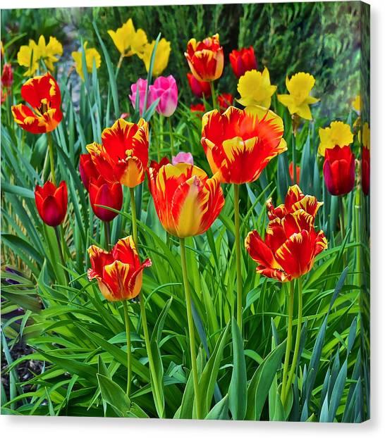 2015 Acewood Tulips 6 Canvas Print