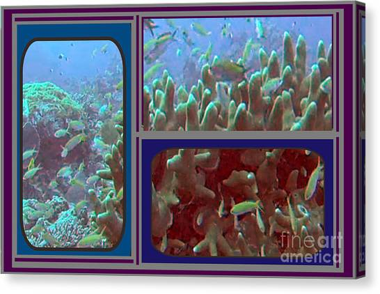 2015 Periscope Perspective Gallery Underwater Coral Reef Vegitation Photography In Landscape Format Canvas Print