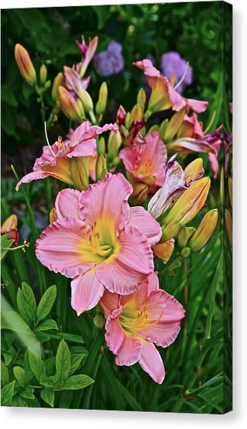 2015 Summer At The Garden Daylilies 1 Canvas Print