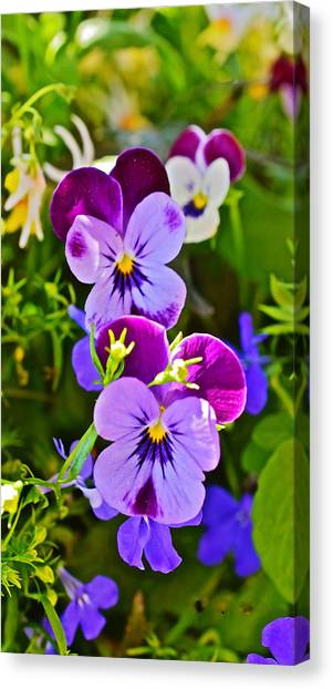 2015 Summer's Eve At The Garden Pansy Totem Canvas Print