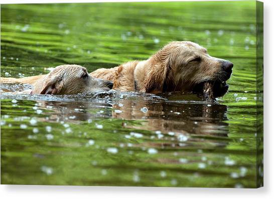 Otters Canvas Print - Dog by Maye Loeser