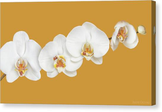 Orchids Canvas Print - Moth Orchid Nursery by Anne Geddes