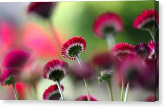 Kiwis Canvas Print - Flower by Mariel Mcmeeking