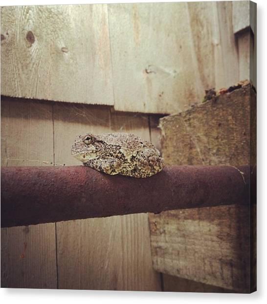 Salamanders Canvas Print - Gray Tree Frog #2 by Salamander Woods Studio-Homestead